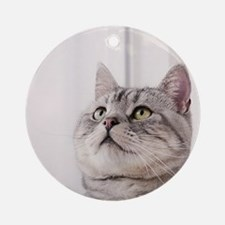 american shorthair grey tabby Round Ornament