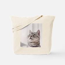 american shorthair grey tabby Tote Bag