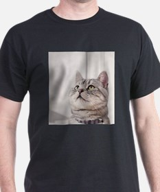 american shorthair grey tabby T-Shirt