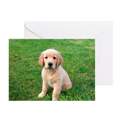 Puppy in the Grass Greeting Cards (Pk of 20)