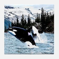 Cute Orca Tile Coaster