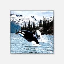 "Cute Orca whale Square Sticker 3"" x 3"""