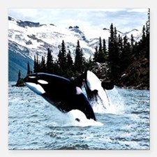 "Unique Killer whale Square Car Magnet 3"" x 3"""