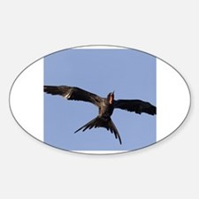 Cool Frigate bird Decal