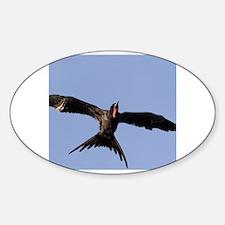 Frigate bird Decal