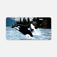 Leaping Killer Whales Aluminum License Plate