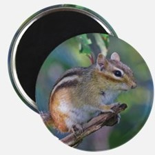 Cute Chipmunks Magnet