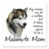 Alaskan malamute Square Car Magnets
