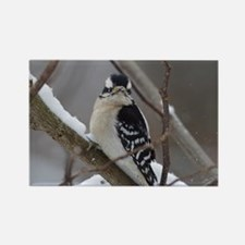 Downy Woodpecker in the Snow Magnets
