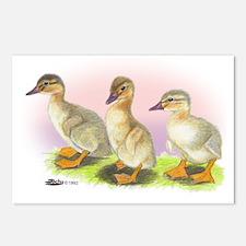 Buff Ducklings Postcards (Package of 8)