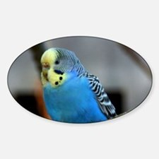 Budgie Flower Decal