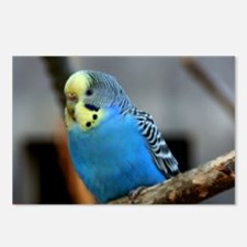 Budgie Flower Postcards (Package of 8)