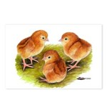 Red Leghorn Chicks Postcards (Package of 8)