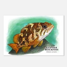 Gopher Rockfish Postcards (Package of 8)
