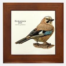 Eurasian Jay Framed Tile