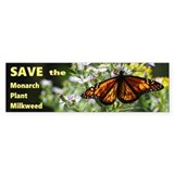Plant milkweed Single