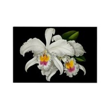 TROPICAL ORCHIDS Rectangle Magnet