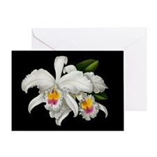TROPICAL ORCHIDS Greeting Card