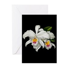 TROPICAL ORCHIDS Greeting Cards (Pk of 10)