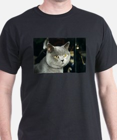 british shorthair blue 2 T-Shirt