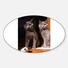 british shorthair blue group Decal