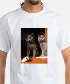 british shorthair blue group T-Shirt