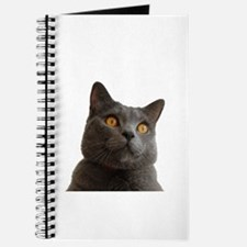 chartreux Journal