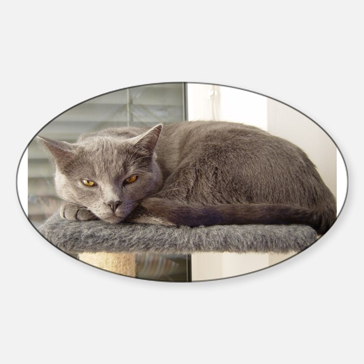 chartreux laying Decal
