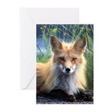 Fox Greeting Cards (10 Pack)