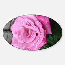 Cute Dew on rose Sticker (Oval)