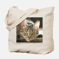 Cool Cat totes Tote Bag