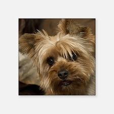 Yorkie Puppy Sticker