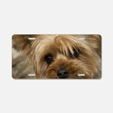 Yorkie Puppy Aluminum License Plate