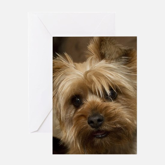 Yorkie Puppy Greeting Cards