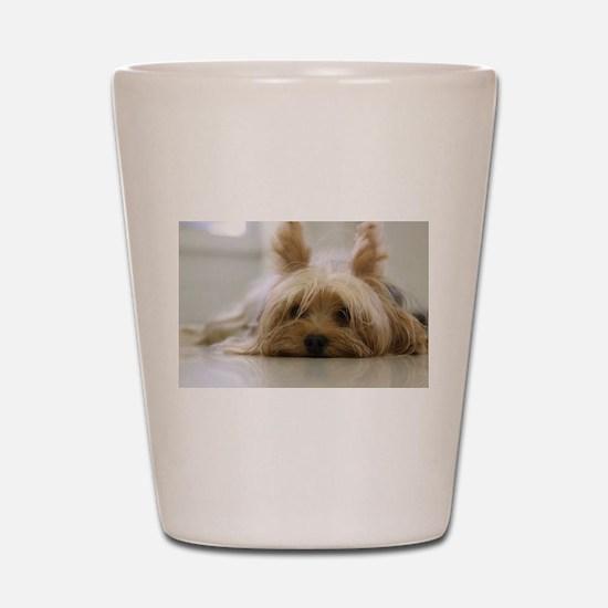 Yorkie Dog Shot Glass