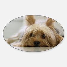 Yorkie Dog Decal