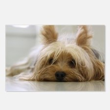 Yorkie Dog Postcards (Package of 8)