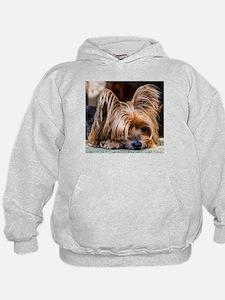 Yorkshire Terrier Dog Small Cute Pet Hoodie