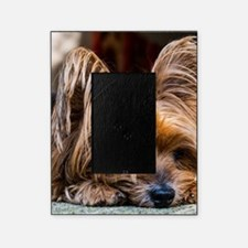 Yorkshire Terrier Dog Small Cute Pet Picture Frame
