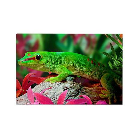 Gecko Lizard Rectangle Magnet