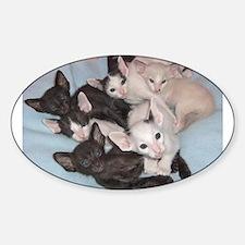 oriental shorthair kitten group Decal