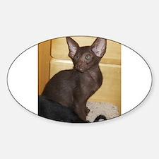 oriental shorthair kitten Decal