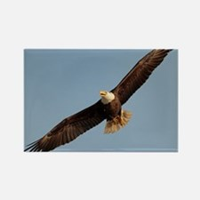 Funny Boston college eagles Rectangle Magnet