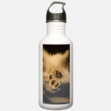 Funny Butt corgis Water Bottle