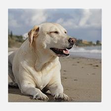 BEACH DOGS Tile Coaster