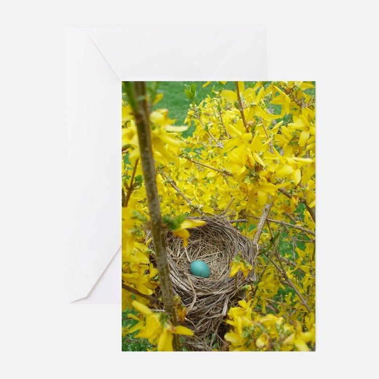 Cute Spring bird Greeting Cards (Pk of 20)
