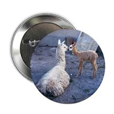 "mom and baby llama 2.25"" Button"