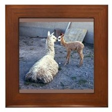 mom and baby llama Framed Tile