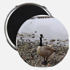 Unique Canadian geese Magnet