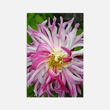 Funny Pink dahlia Rectangle Magnet